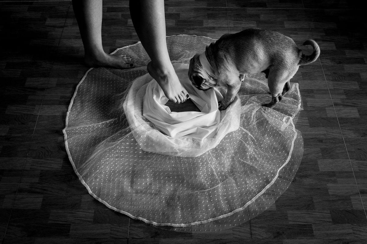 ideas de boda con perro
